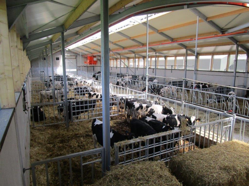 Maarten Vogels Agri Verzamelplaats runderen,Verhagen